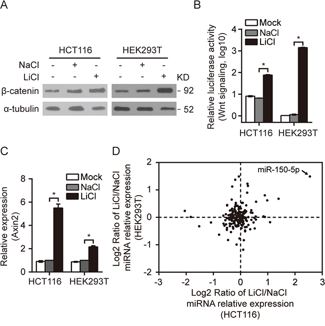 A group of miRNAs were responsive to the activation of Wnt/β-catenin signaling.