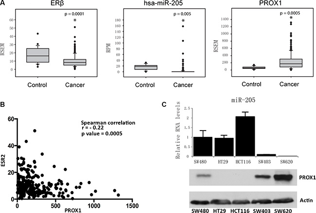 Expression of ERβ, miR-205, and PROX1 in human colon tissues and cells.