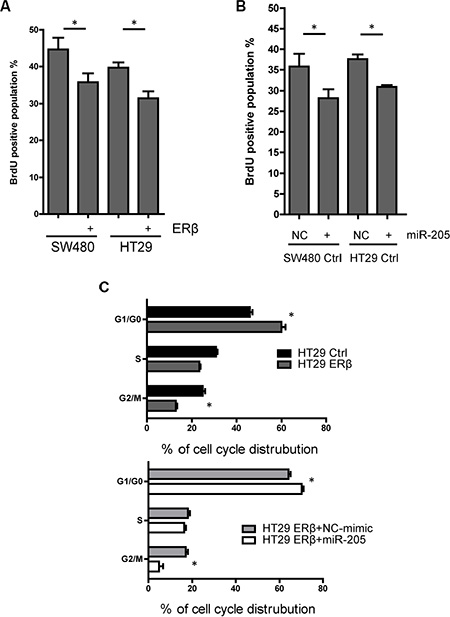 Both ERβ and miR-205 block cell proliferation.