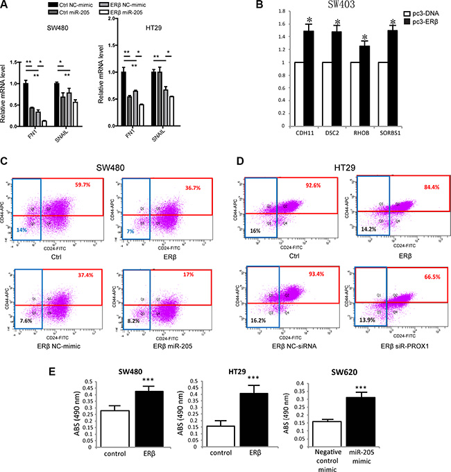 ERβ and miR-205 affects EMT, stemness and cell adhesion in colon cancer.