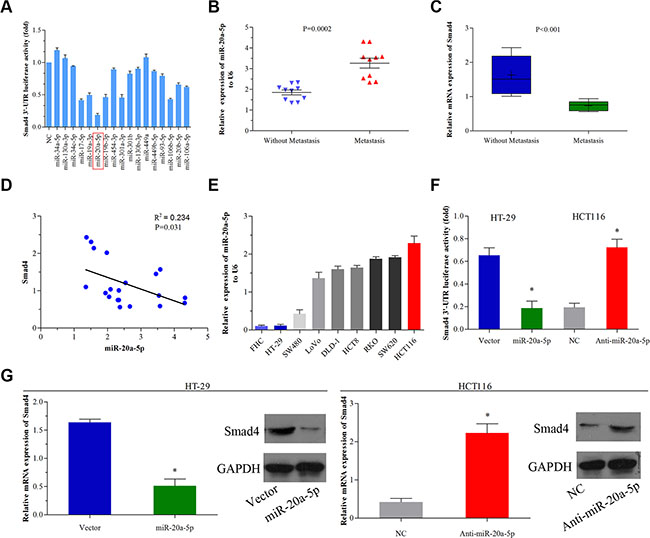 miR-20a-5p negatively regulated Smad4 in human colorectal cancer.