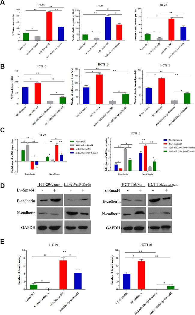 miR-20a-5p promoted the onco-process of CRC cells via Smad4 repression.