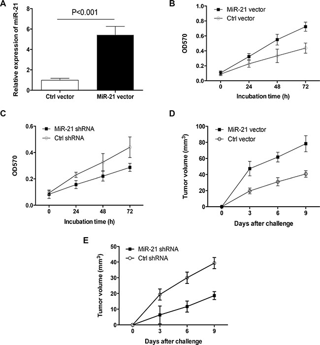 MiR-21 was crucial for primary lung cancer outgrowth.