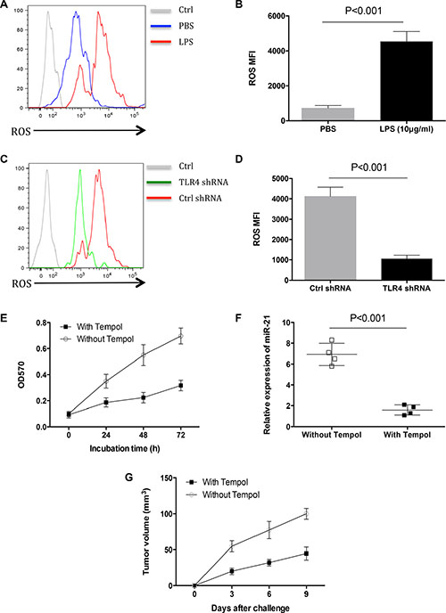 ROS conferred increased miR-21 expression by LPS stimulation.