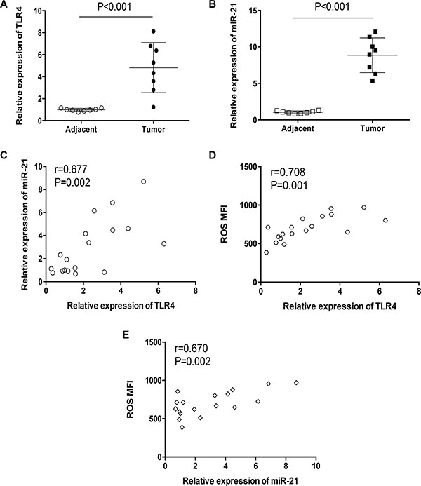 TLR4 expressions correlated with miR-21 expression and ROS production in clinical patients.