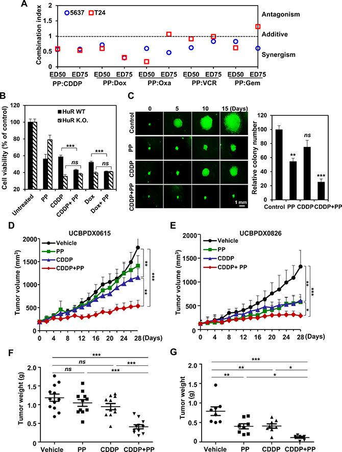 Pyrvinium pamoate potentiates genotoxic agents in vitro and in vivo.