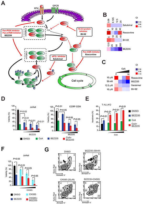 Joint pharmacologic inhibition of Cn with inhibitors of canonical pathways enriched in PPP3CA-binding proteins identifies PI3K-mTOR inhibition as the most synergistic anti-leukemic combination.