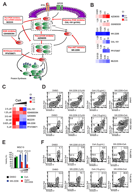 Inhibition of AKT is responsible for the synergistic anti-leukemic effect of PI3K-mTOR pathway inhibition with Cn inhibition.