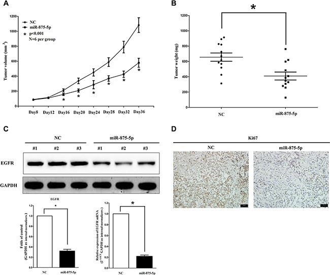 Ectopic expression of miR-875-5p suppresses tumor growth in vivo.