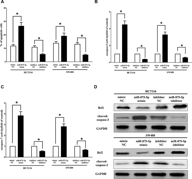 Ectopic expression of miR-875-5p promotes apoptosis in HCT116 and SW480 cells.