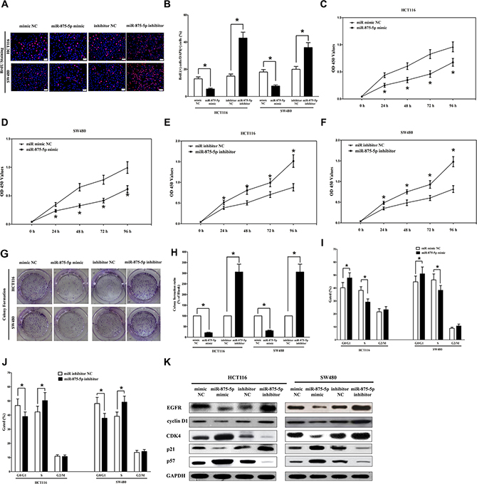 Ectopic expression of miR-875-5p inhibits proliferation and colony formation of HCT116 and SW480 cells.