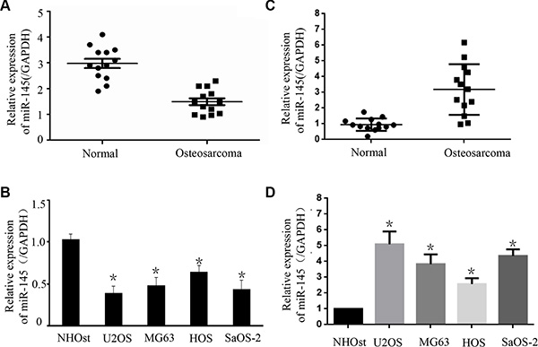 The expression of miR-145 and FLI-1 in osteosarcoma tissues and cell lines.