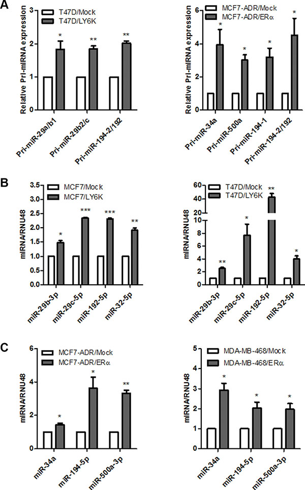 Validation of primary and mature miRNAs induced by LY6K or ERα.