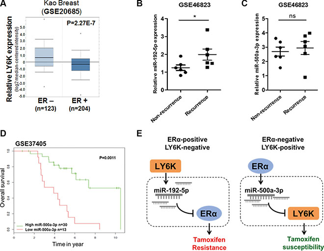 miR-192-5p and miR-500a-3p involved in LY6K and ERα are related to tamoxifen resistance in breast cancer patients.