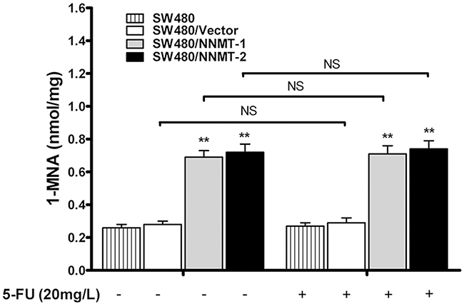 NNMT increases intracellular level of 1-MNA in CRC cells independently of 5-FU.