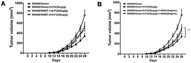 NNMT attenuates 5-FU suppression of tumor growth via 1-MNA in vivo.