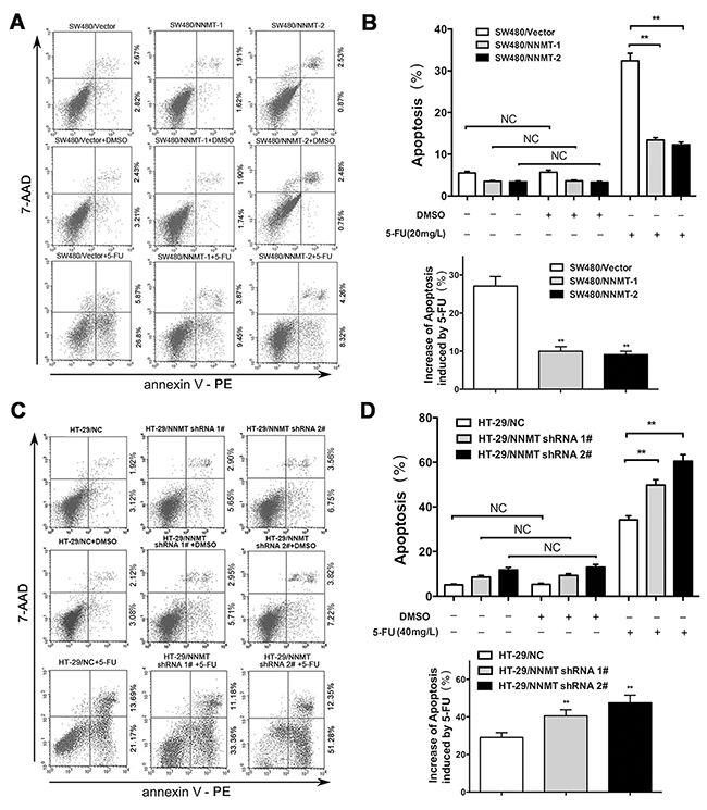 NNMT reduces apoptosis in 5-FU induced CRC cells.