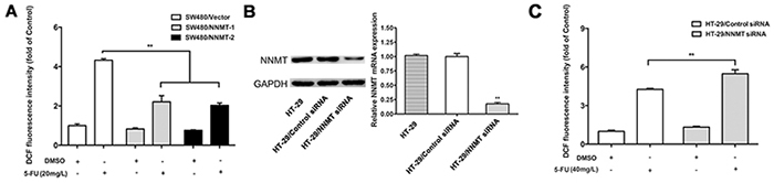 NNMT reduces the ROS production in CRC cells after treatment with 5-FU.