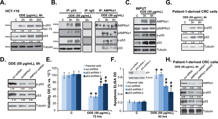ODE activates p53 signaling in CRC cells.