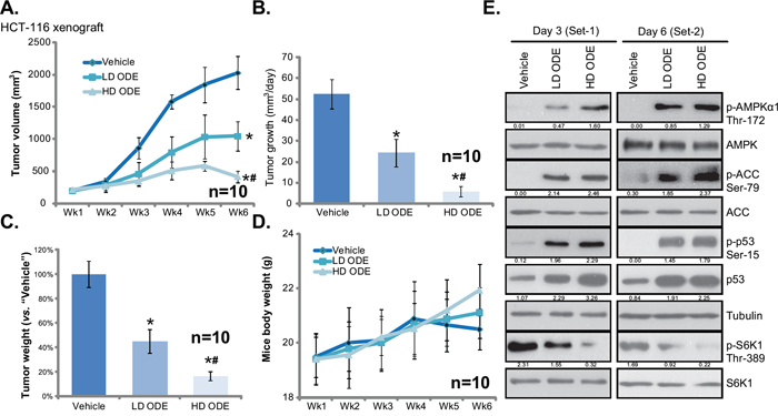 ODE inhibits HCT-116 xenograft growth in SCID mice.
