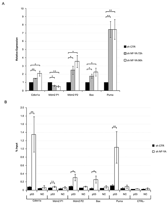 Activation of functionally active p53 in NF-YA-inactivated Hela cells.