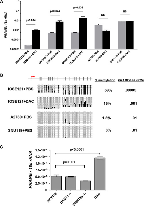 PRAME expression in decitabine (DAC)-treated and DNMT knockout cells.