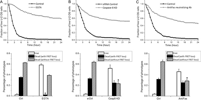 Granzyme-B independent killing by primary NK cells is mainly induced by extrinsic apoptosis through FasL.
