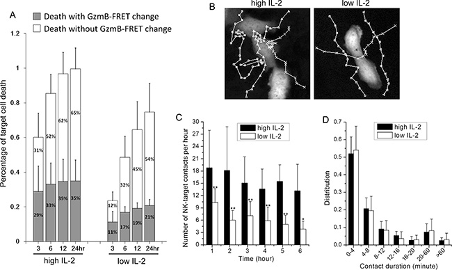IL-2 promotes NK cell movement towards the cancer target and increases the frequency of NK-target cell interaction.