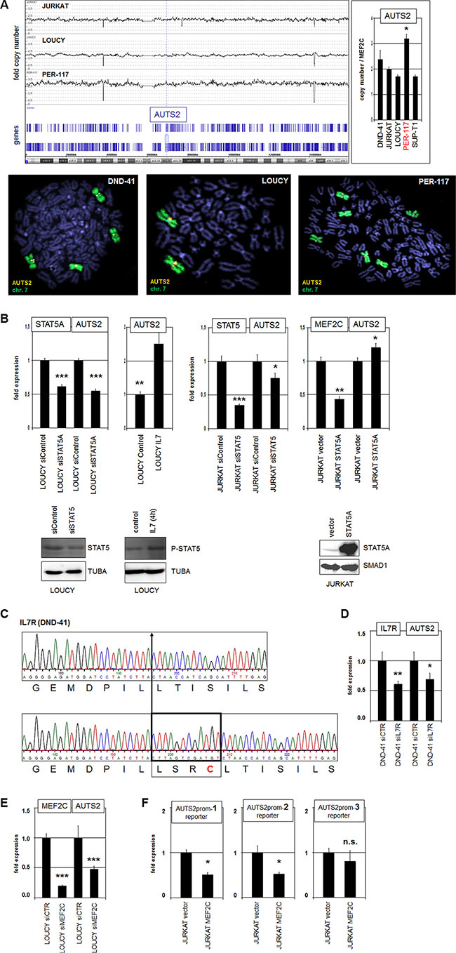 Gain at 7q11, IL7-STAT5 and MEF2C activate AUTS2 expression.