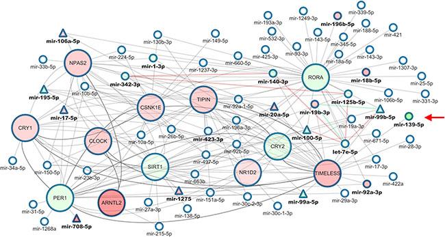 Core clock genes-miRNAs correlation network in colorectal cancer.