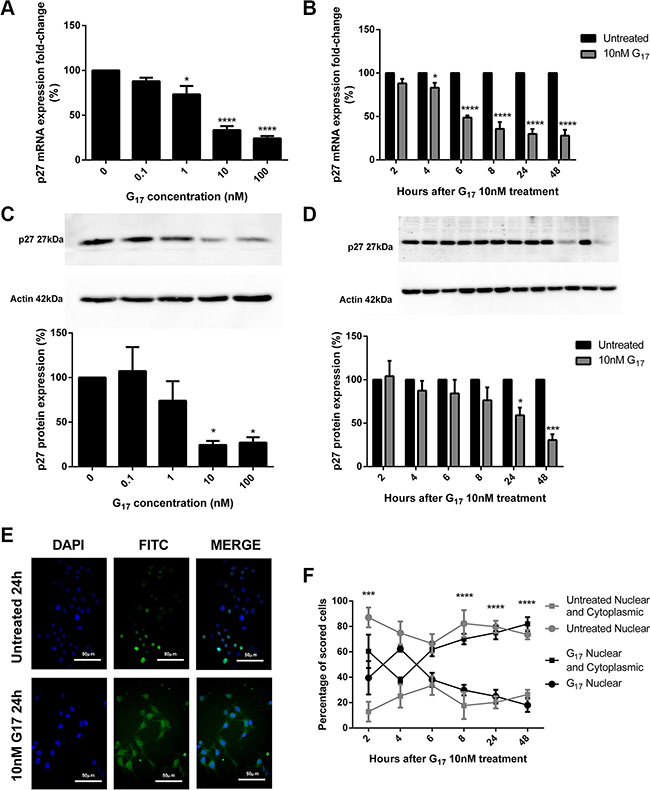 p27 mRNA expression significantly decreased dose (A) and time (B) dependently in AGSGR cells treated with gastrin.