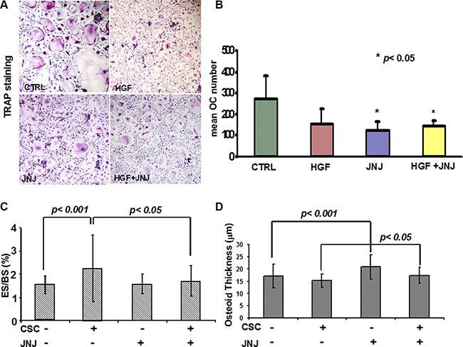 Effects of JNJ on osteoclasts (OCs).