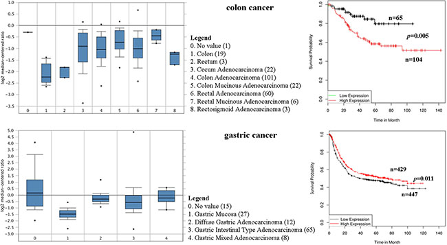 CD44 mRNA was evaluated in colon and gastric cancer by using Oncomine analysis.