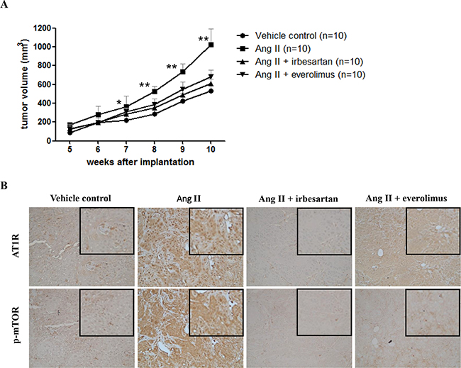 (PDF) AAV-Mediated angiotensin 1-7 overexpression inhibits