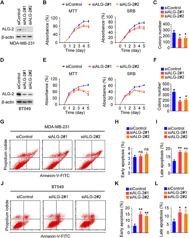 Unshielding Exosomal RNA Unleashes Tumor Growth And