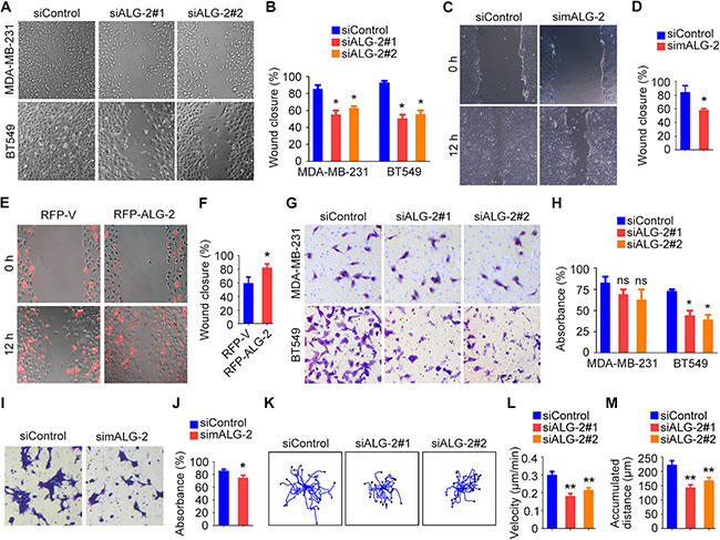 Upregulation of ALG-2 in breast cancer tissues is