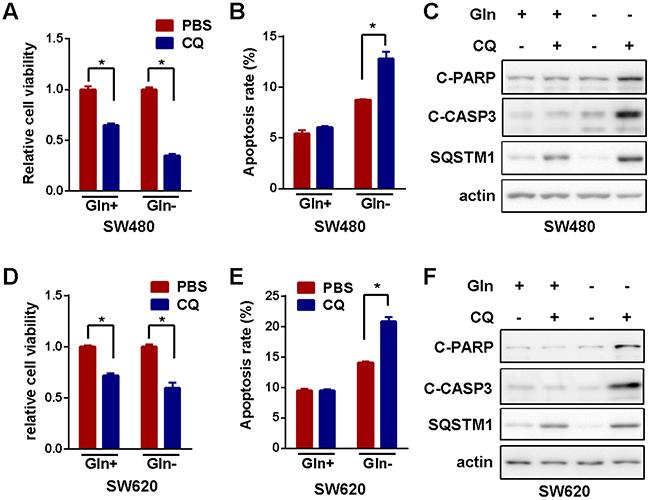 Blockage of autophagy enhances MLN4924-induced suppress