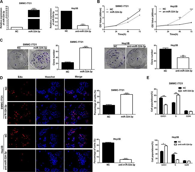 EGFR inhibitor promotes phosphorylation of Stat3 in