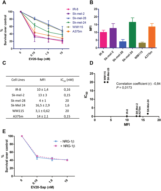 EV20-Sap, a novel anti-HER-3 antibody-drug conjugate