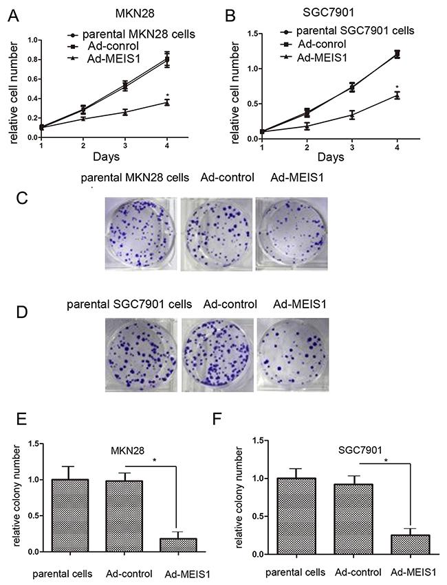 Tumor suppressor miR-449a inhibits the development of