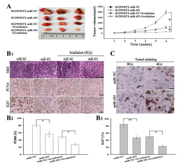 Effect of miR-451 expression on irradiation-induced