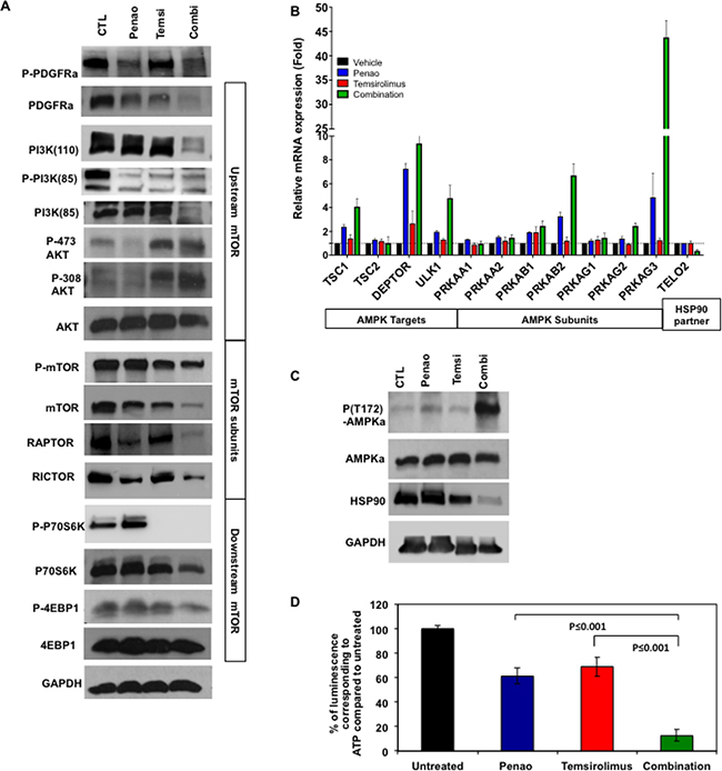 The wt peptide reduces tumor cell viability in a SALL4