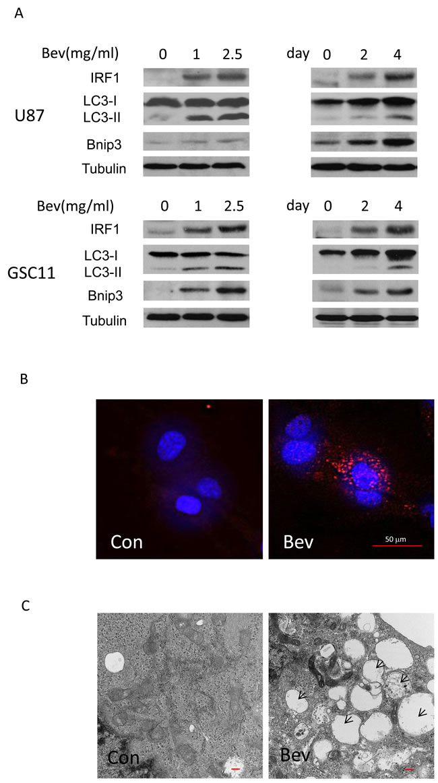 (PDF) Small molecule enhancers of rapamycin-induced TOR