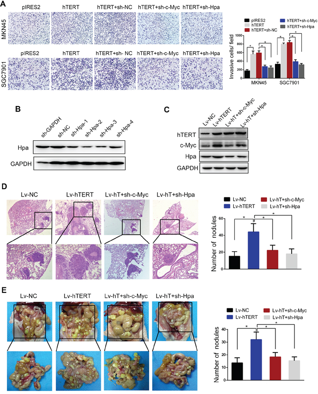 Monoclonal human gastric and colorectal cancer stem cells