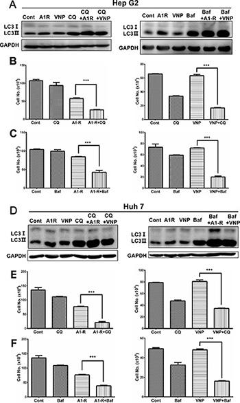 Inhibition of autophagy enhances the cytotoxity of EGFR