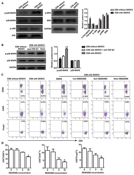 p38 MAPK signaling is required for conversion of CD8+ T cells to CD8+ Tregs.