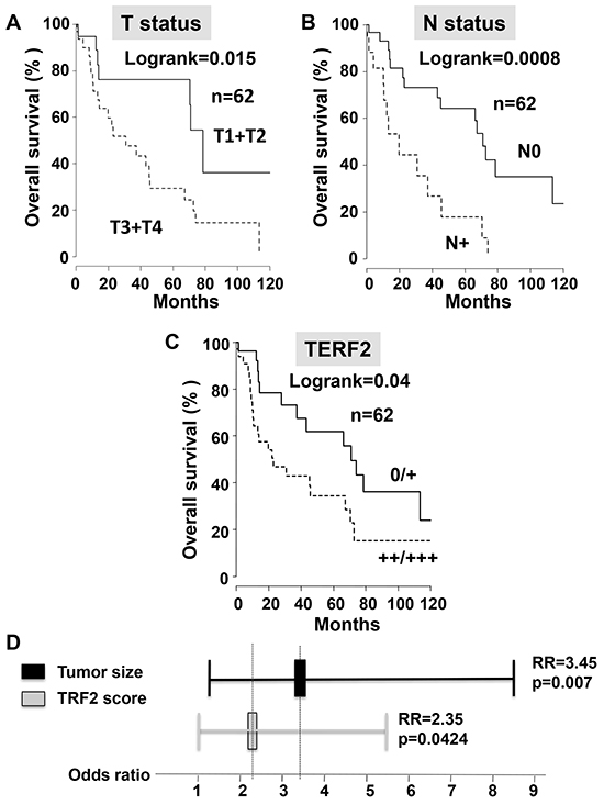 TERF2 is a marker of poor prognosis that is independent of the tumor size.