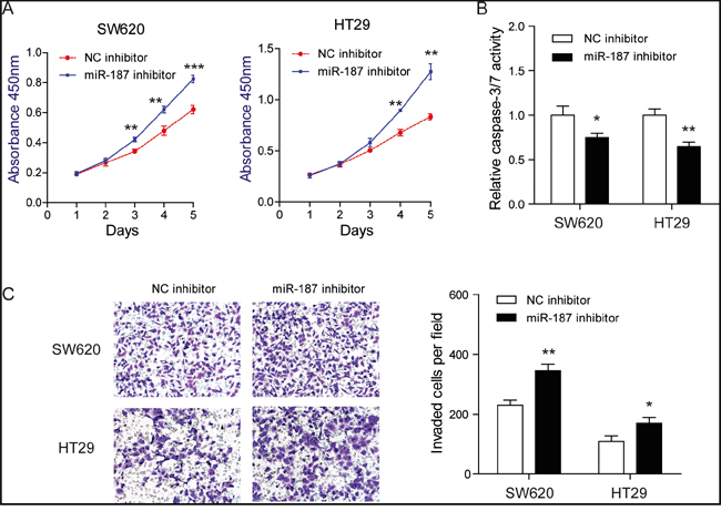 Knockdown of miR-187 promotes cell proliferation, invasion and inhibits apoptosis in CRC cells.