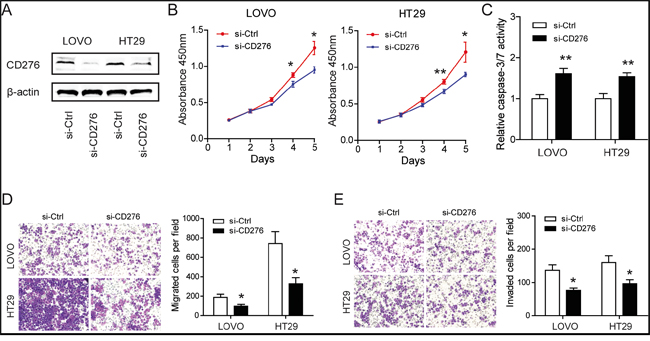 Silencing of CD276 compromises the tumor progression of CRC in vitro.