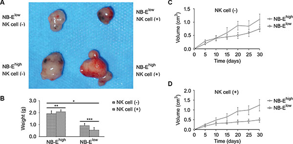 Effect of HLA-E expression on tumor growth.